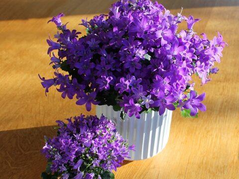 cserepes virágok